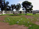 Streaky Bay Foreshore Tourist Park - Streaky Bay: Cottage accommodation, ideal for families, couples and singles