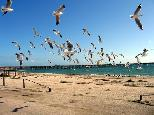 Smoky Bay Caravan Park - Smoky Bay: Lots of seagulls