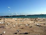 Smoky Bay Caravan Park - Smoky Bay: Seagulls